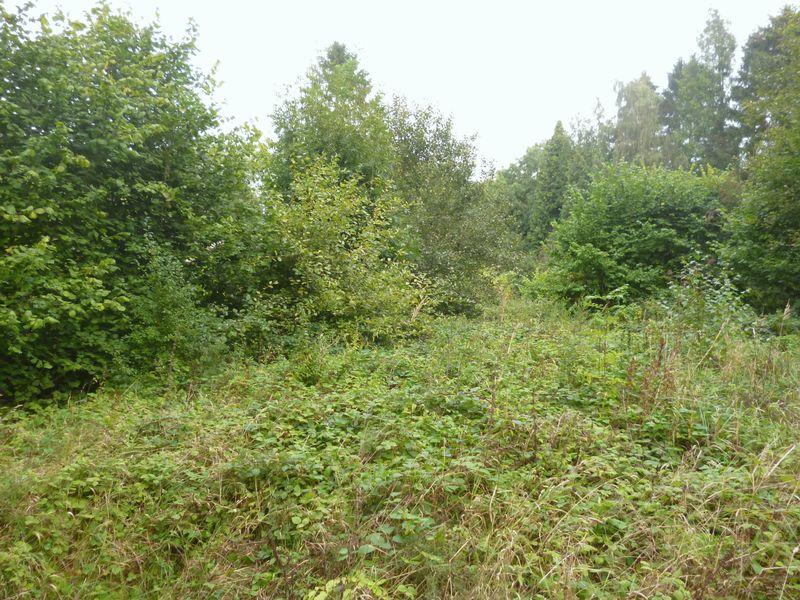 Amenity Woodland, West Road (A151)