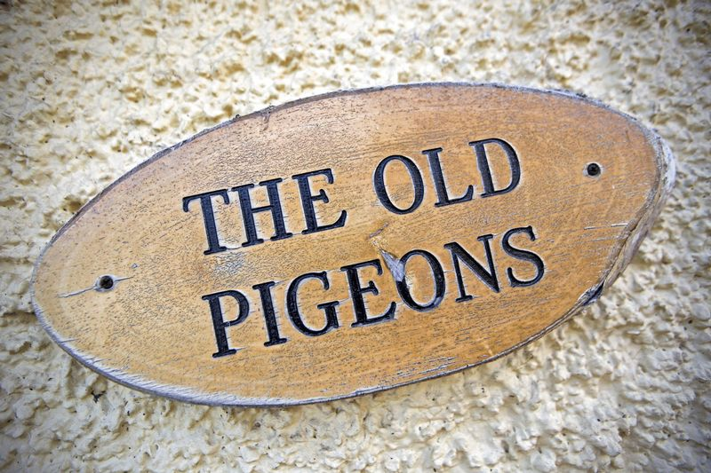 The Old Pigeons