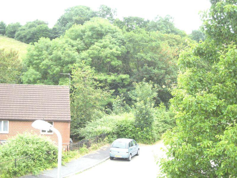 Cornflower Hill