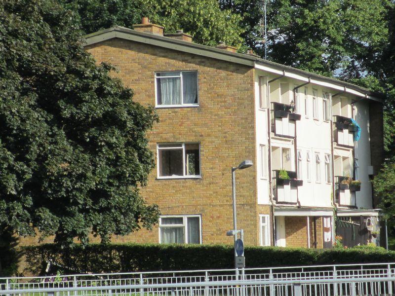 Buckthorn Avenue