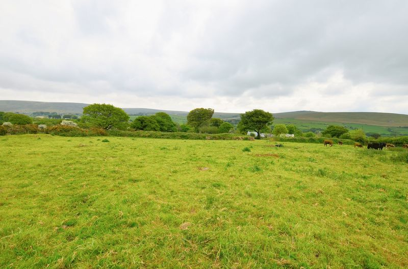 Ideal Grazing Land