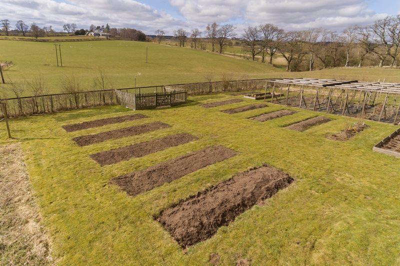 Paddock / Vegetable garden