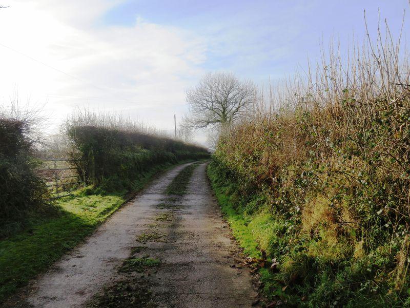 Blackawton