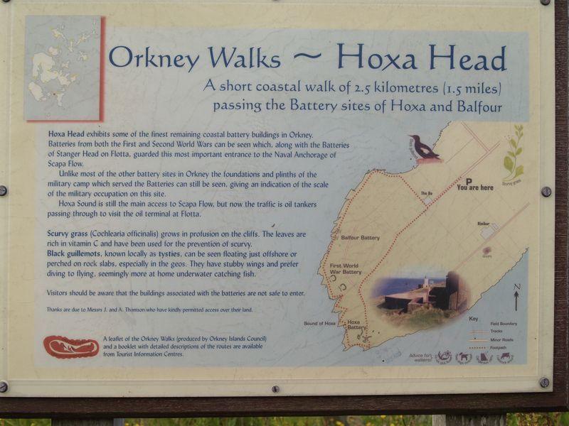 Hoxa Head