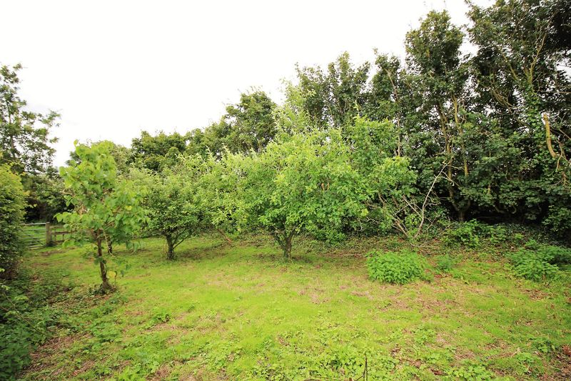 Small Orchard
