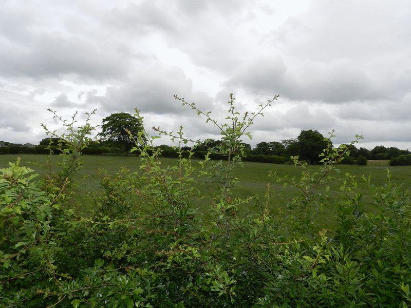 Lanark Road Braidwood