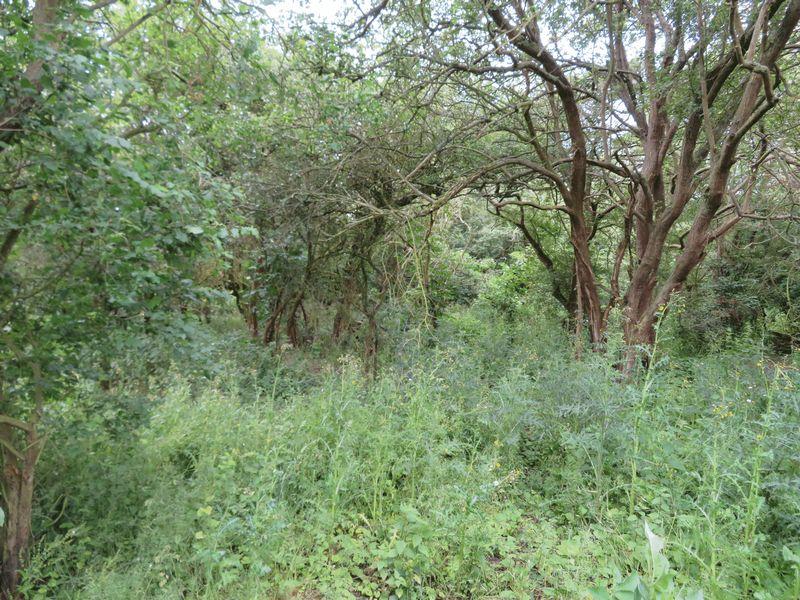 Woodrolfe Farm Lane