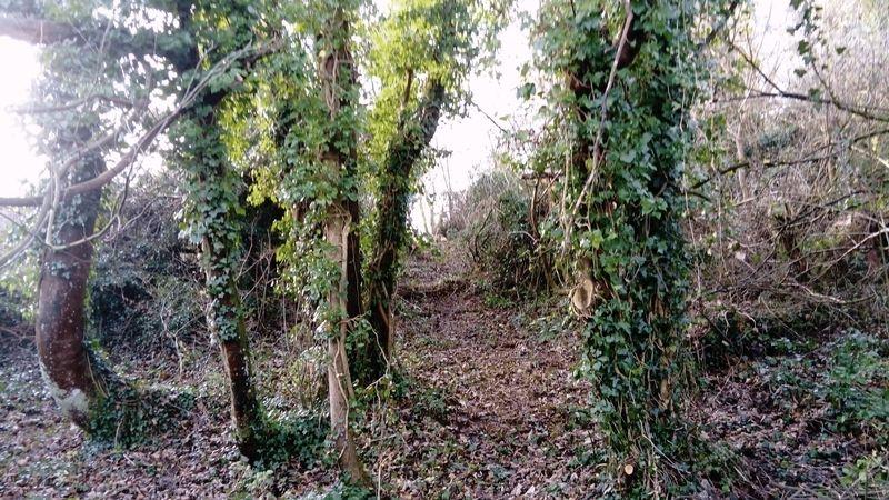 Edginswell Lane