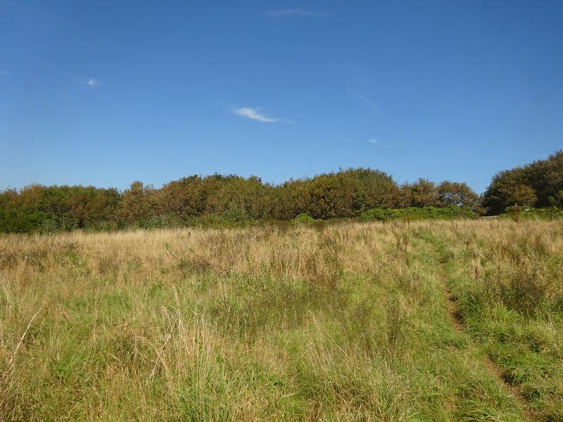 Kendall Park Polruan