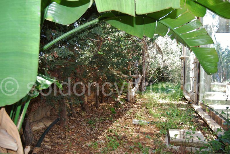 Landscaped mature garden