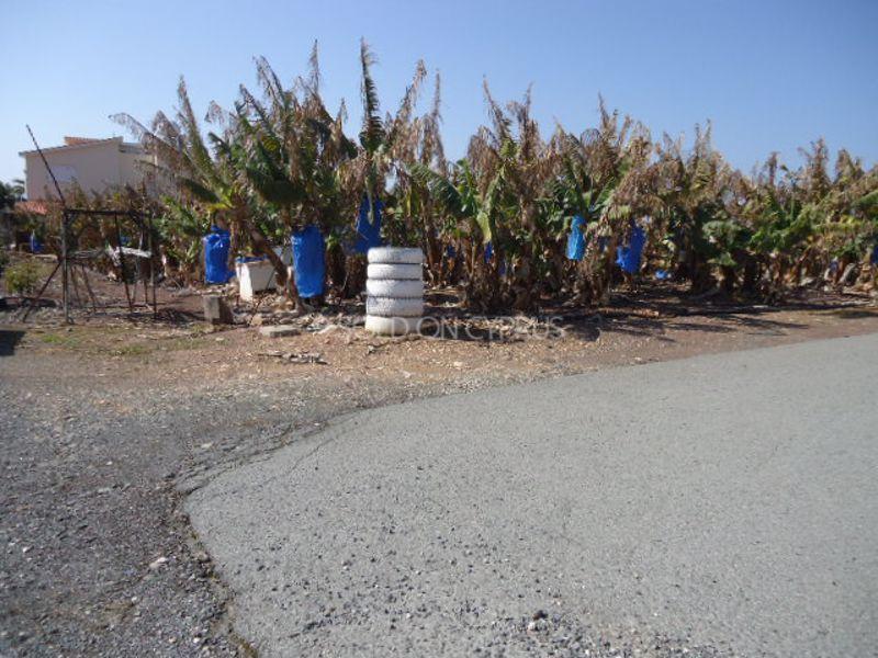 Banana-plantation