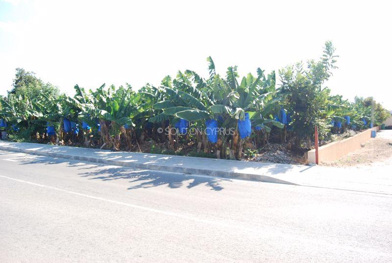 Banana plantations to the side