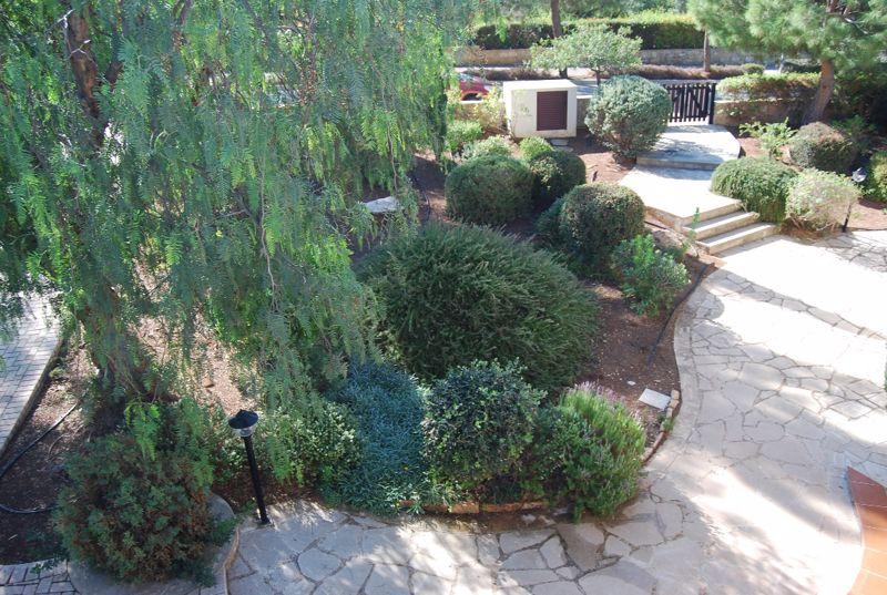 Mature front garden