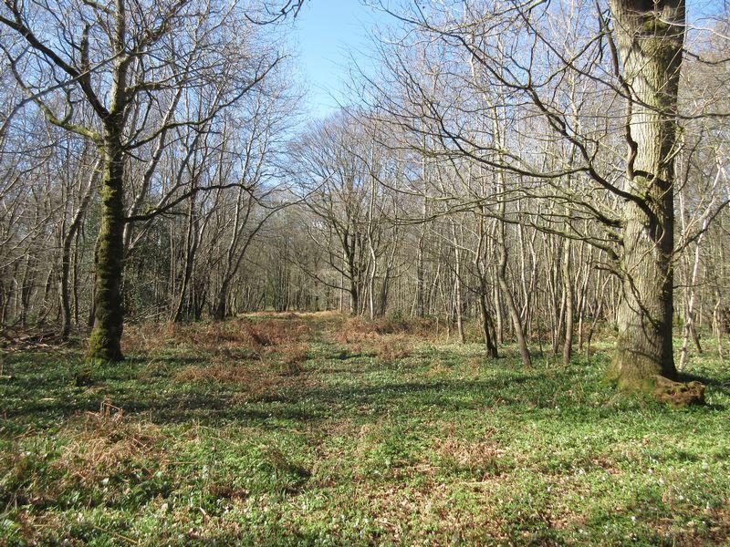 Hundred Acre Lane