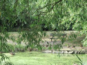 Pond & Parkland Opposite