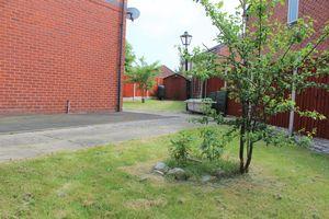 Biddlestone Grove, Yew Tree