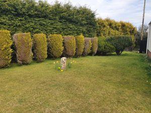 Gainsborough Park Foxhole