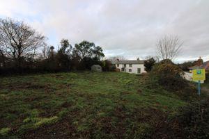 Meadow Farm Rose