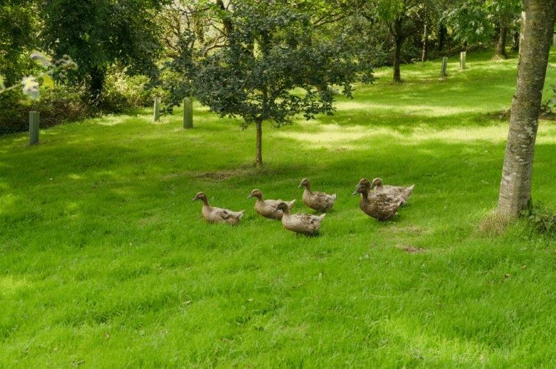 The Orchard and residents