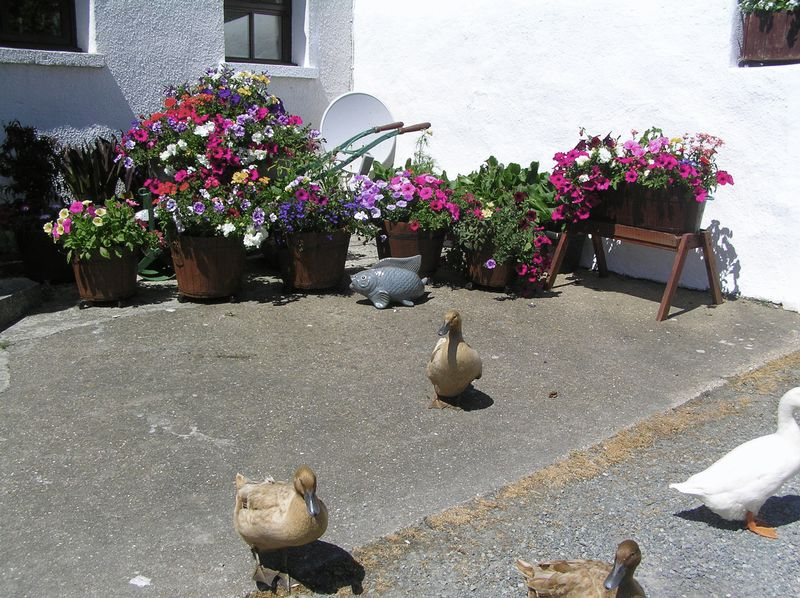 Residents by the Byre