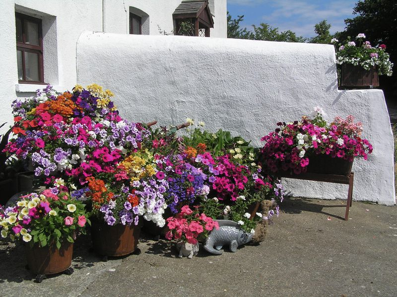 Flower display by the Byre