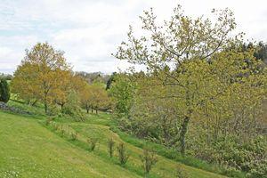 Blossom Hill Park