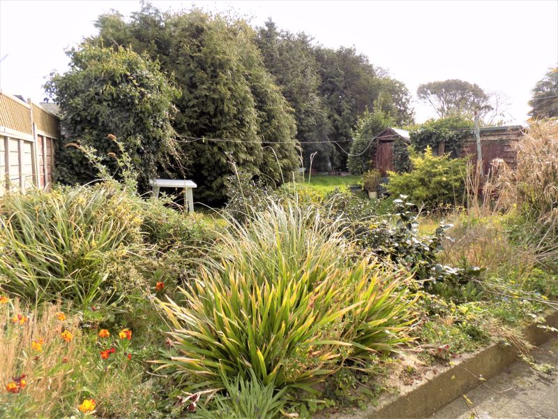Garden - Continues Beyond Trees