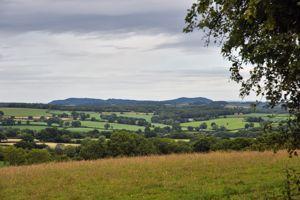 Bredenbury