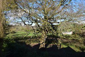 Shortmoor