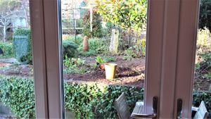 Pheasant Visiting The Garden