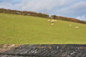 Animals Grazing in Neighboring Field