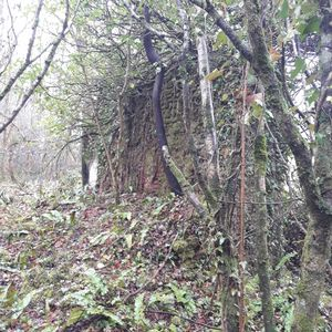 Spring Grove Milverton