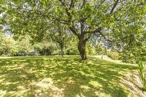 Woodfield Hill