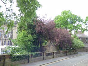 Robert Street