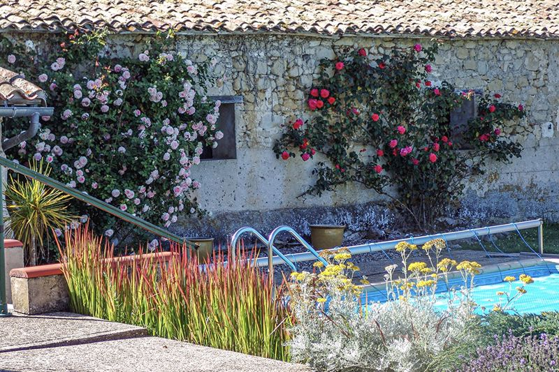 Swimming pool and climbing roses
