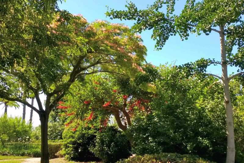 Park Exiflora
