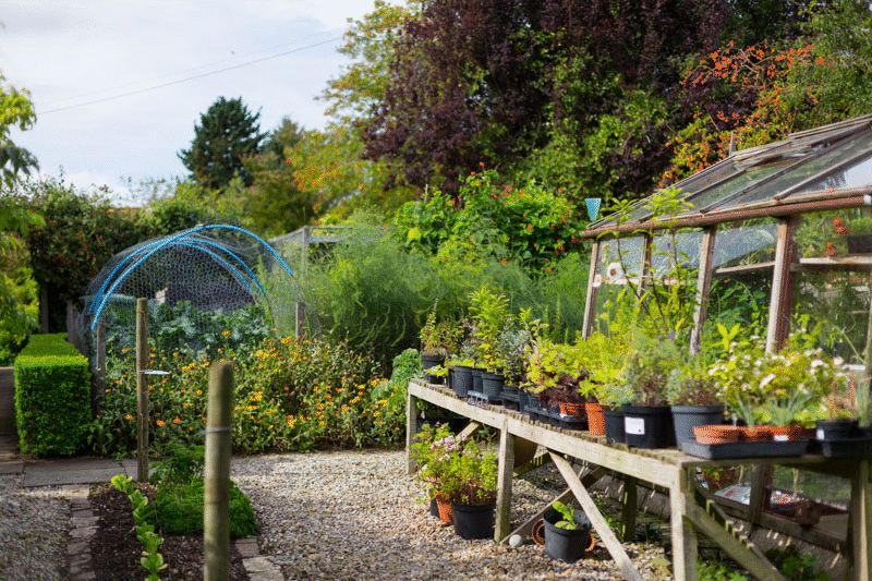 Greenhouse and kitchen garden