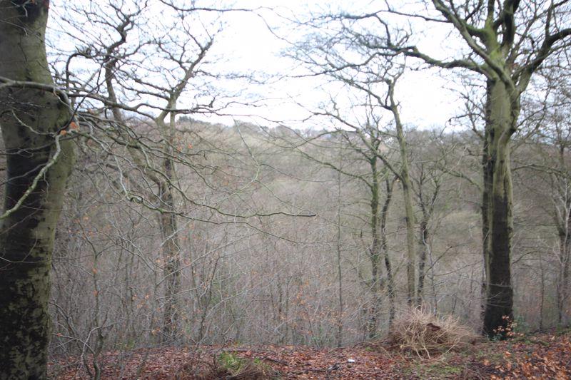 Mountain Ash Rooley Moor