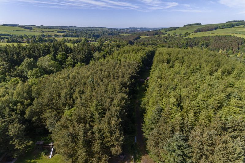 Aerial View of Wood
