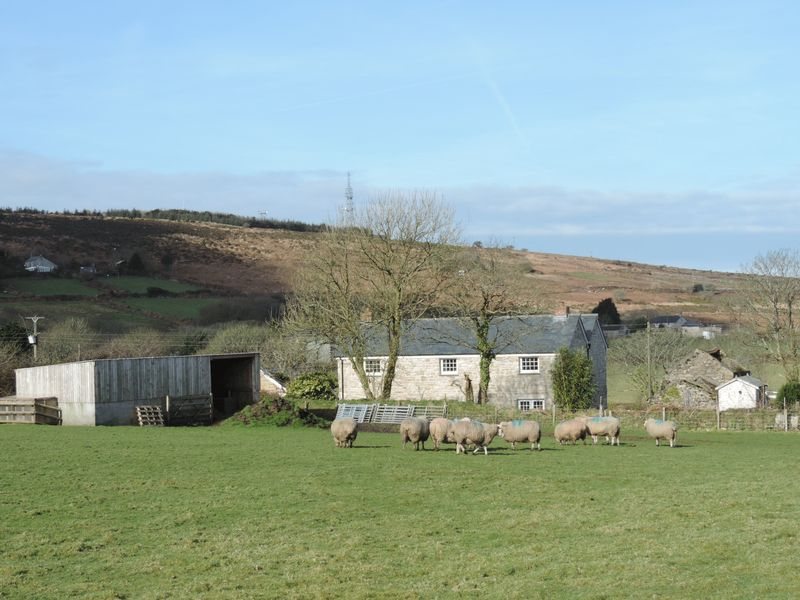 Land with livestock shed
