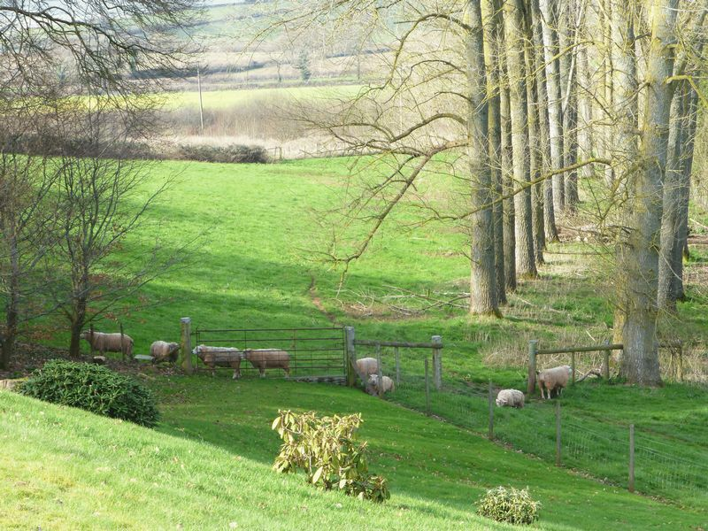 THE LAND AND SHEEP