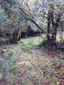 Small River Wood Blaenpennal