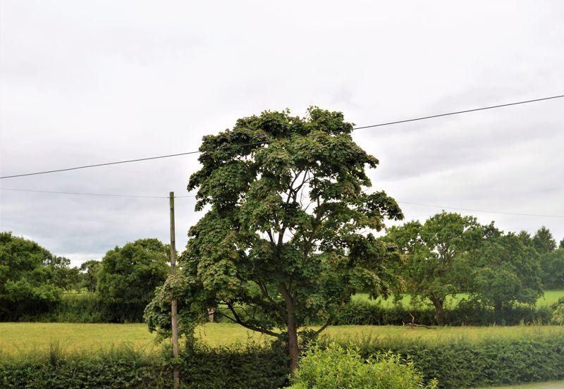 Primrose Lane Helsby