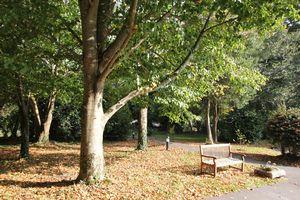 Roseland Parc Tregony