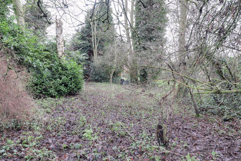 Large Woodland Garden