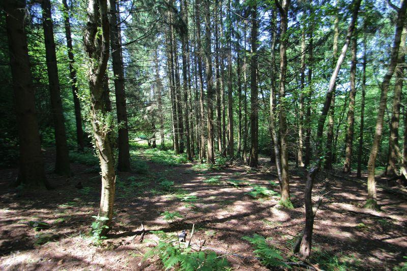 Dewlands Hill