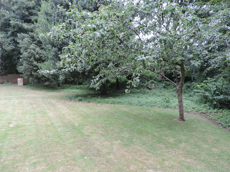 Grounds With Apple Tree