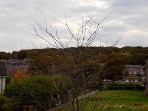 Cairngorm Gardens