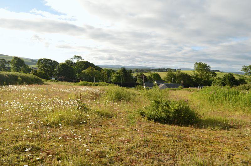 Ellridgehill Elsrickle