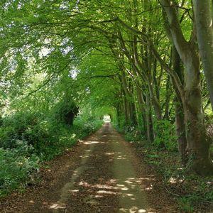 New Road Gatcombe